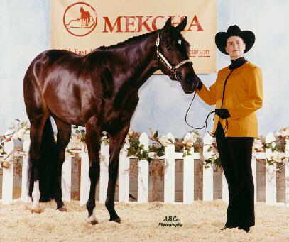 Taylor earned 2 seconds in NA showmanship at the MEKQHA show in June, 2001, only her 3rd time showing showmanship!